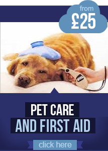 First Aid Course for £25